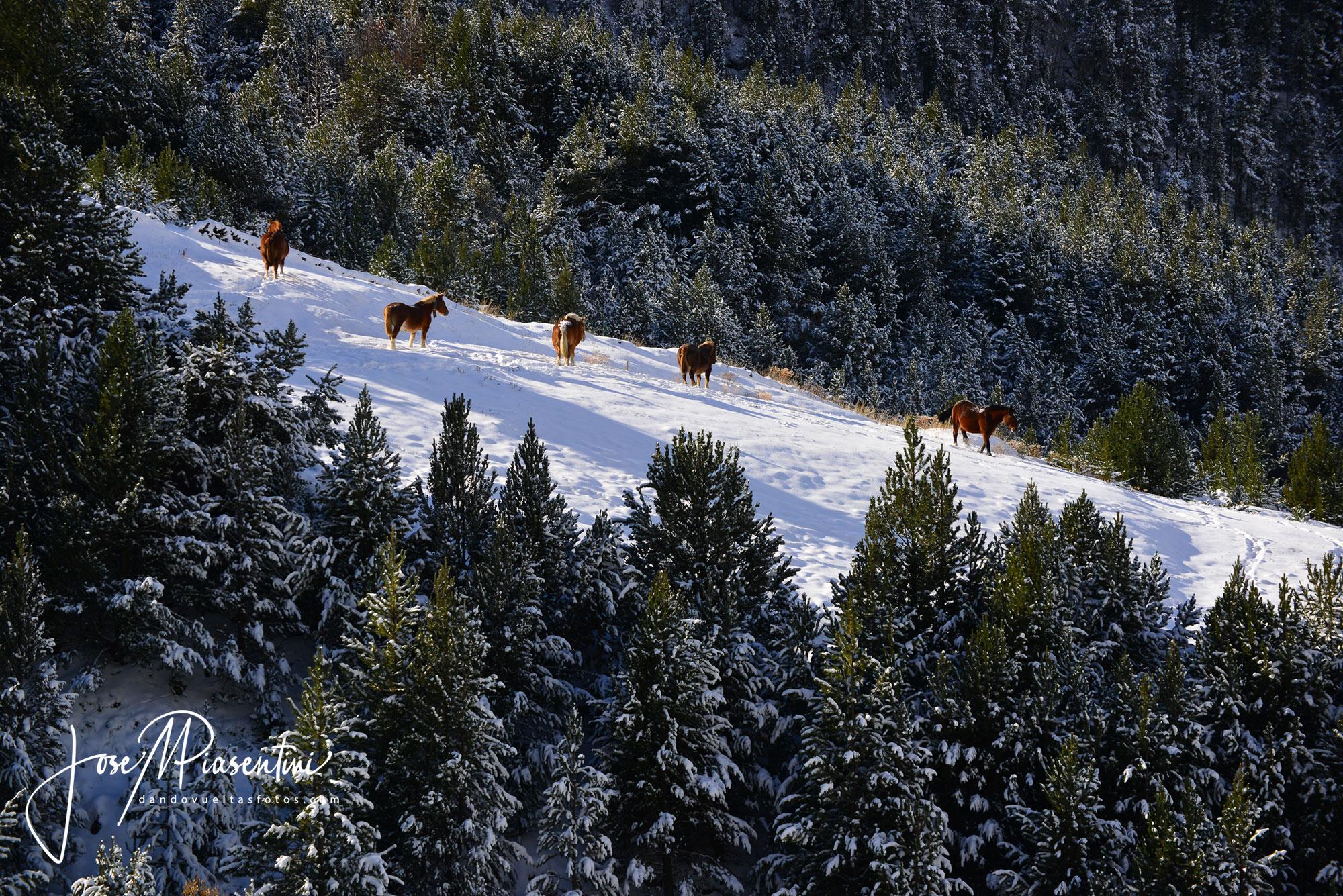 Caballos en los Pirineos
